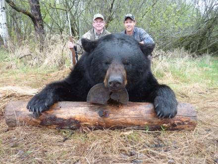Boone and Crockett Black Bear