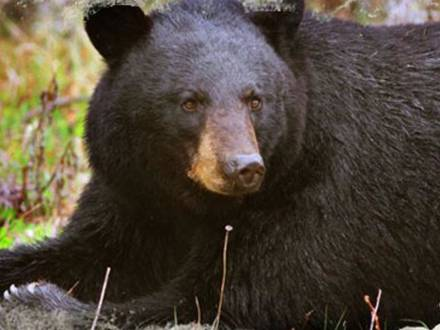 Bear Track Outfitters
