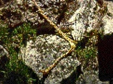 Alonsa_Conservation_District_-_Thunderbird_Nest.jpg