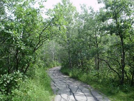 Assiniboine Forest