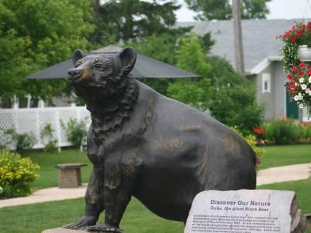 Duke the Giant Black Bear