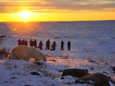 Guests watch a polar bear on a Churchill Wild Safari - Ian Johnson