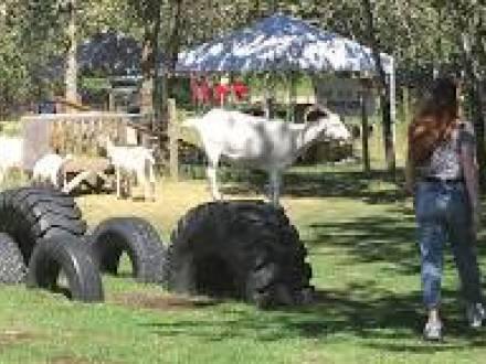 Kismet Creek Farm
