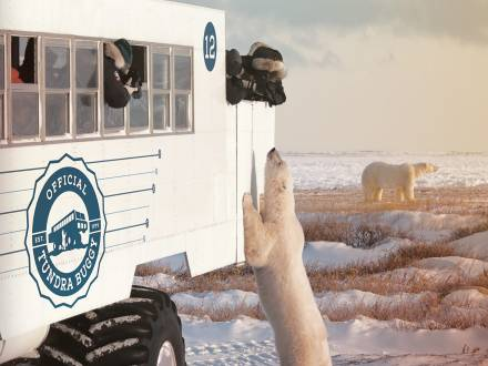 The Tundra Buggy® adventure in Churchill, Manitoba.