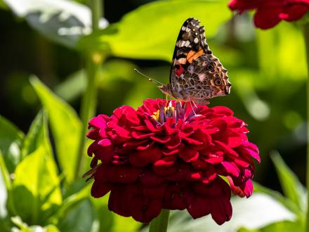 Flower and Butterfly at Assiniboine Park