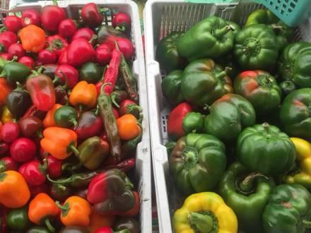 Steinbach & District Farmers' Market